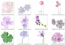 EXCLUSIVE Flowers Element Mix 1 by Kreen Kreations