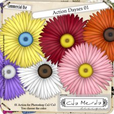 Daises 01 Action by Cida Merola