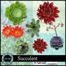 EXCLUSIVE Succulent kit by Happy Scrap Arts