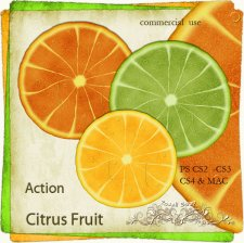 Action - Citrus Fruit by Rose.li