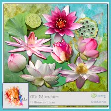 Vol. 157 Lotus flowers EXCLUSIVE bymurielle