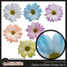 EXCLUSIVE Daises with Water Drops Set 2 by NewE Designz