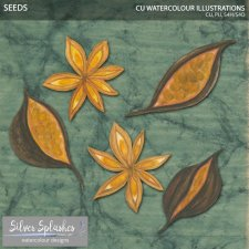 EXCLUSIVE Seeds Watercolour by Silver Splashes