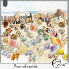 Assorted seashells by Cajoline-Scrap