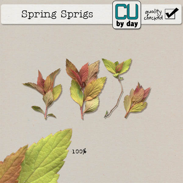 Spring Sprigs - CUbyDay EXCLUSIVE